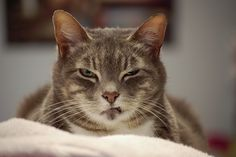 Angry cat is angry | Flickr - Photo Sharing!