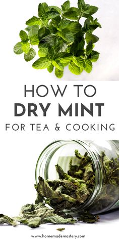 How to dry mint for tea and cooking! Drying your own mint leaves in the oven, or airdrying is easy and will provide you with high-quality dried mint leaves! Mint Recipes, Herb Recipes, Canning Recipes, Dinner Recipes, Healing Herbs, Medicinal Herbs, Drying Mint Leaves, Uses For Mint Leaves, Mint Leaves Recipe