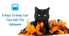 Enjoy the holiday without having to worry about your feline friend.