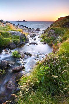 Eden - Wild Cornwall
