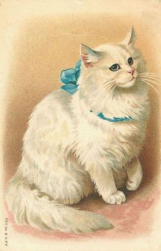 A white cat wearing a blue bow