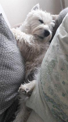 Sleeping beauty - Gabbi