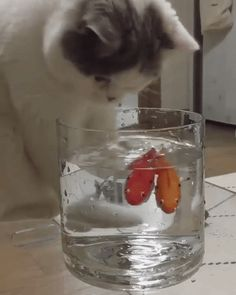 Alaruine see what's new today ?: Cute cat play with fish