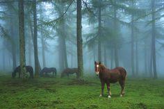 15 fotos para desear ir al Parque Natural del Gorbea, Euskadi