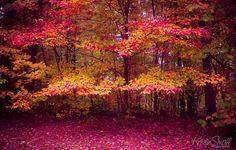 Fall Fantasy | Flickr - Photo Sharing!