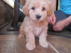 Love this puppy!! would be a great addition to the Blonde-Moir house hold!!