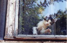 Most Beautiful, Beautiful Places, Beautiful Creatures, Romania, Windows, Animals, Gatos, Cats, Animales