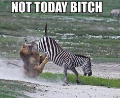 Not Today! - http://lolonce.com/not-today/