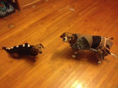 Skyrim dogs...oh my goodness...don't show my husband or I'll have to make these for our cats!