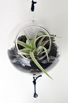 Air Plant Terrarium - Hanging Glass Orb - black reindeer moss - clear sea glass - Home and Garden - Gift Ideas.