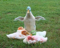 Blue Dyed Chicken | http://www.backyardchickens.com/forum/uploads/2832_ducks050409.jpg