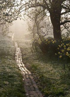 Carol Casselden, Orchard Path at Sunrise
