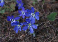 Estonian flora