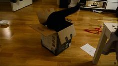 Cat Tries a Cardboard Box. Fivel loves small boxes, sometimes they are just too small.