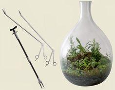 Aprenda a fazer um terrário, a mini floresta em vaso - Casa