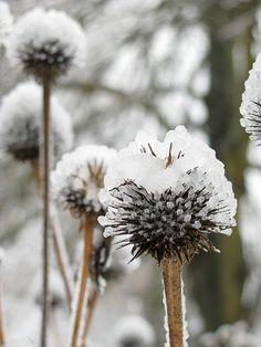Fotografie van winter, ijs en natuur, ijskristallen en ijsbloemen, tuinieren, seizoenen,buiten