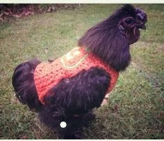 Chickie sweaters!