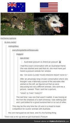I'm so happy to live in Hawai'i! The scariest thing we have are sharks and you can avoid them by not going in the ocean. Or outside. Because I don't really go outside much.<<There was a mix up and America got Australia's possum
