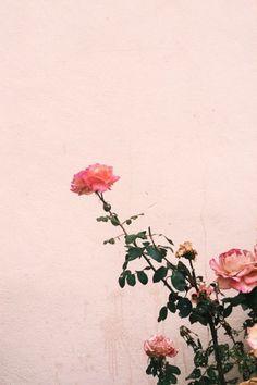 pretty flowers #pretty #life