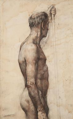 Anatomy toned paper sepia charcoal 43.3x15.7inches