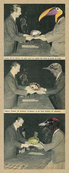 Sammy Slabbinck - collage