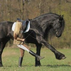 dancing with my horse