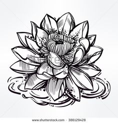 Simple Water Lily Drawing Water lily pencil drawings