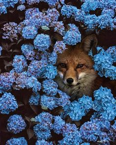 I don't know which is more beautiful....the flora or the fauna