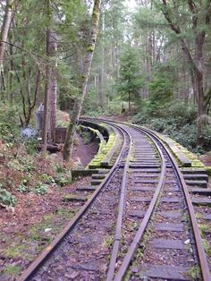 Train Track at Point Defiance