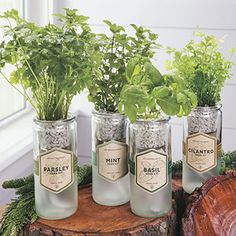 ECO-PLANTER ORGANIC HERB KIT   Lovely jars with antique-like, yet contemporary labels. Would match any decor! Fabulous gift for gardeners!   Jackson & Perkins    ♡ I HAVE A PLACE ALREADY SAVED ON OUR KITCHEN COUNTER!!! ♥A
