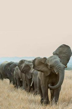 I see this and ALL I can think about is the elephants from The Jungle Book haha