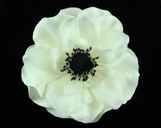 White Anemone Hair Clip available for purchase at www.Azune.com