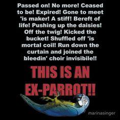 Monty Python - Dead Parrot by marinasinger