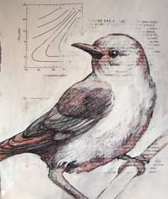 bird_sketches 023_W by PS pics, via Flickr