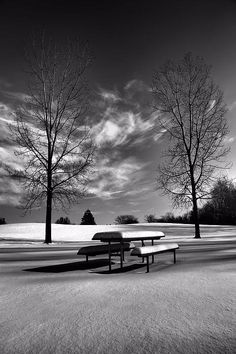 Title  Snowy Morning In Black And White   Artist  Dan Sproul   Medium  Photograph - Digital