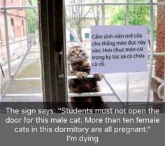 Let me in hooman. Tryin' to get laid here hooman.