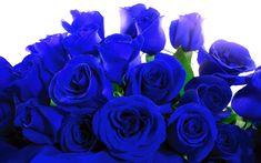 rosas - Pesquisa Google