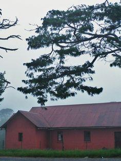 Mist, between Lusikisiki and Bizana, Transkei, South Africa, 2010.