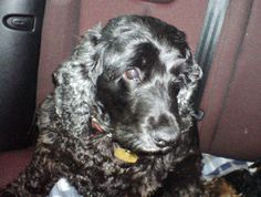 My very beautiful and best friend Holly.  Sadly no longer with me but will always be in my heart.