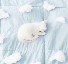 aesthetic, blue, cat, cloud, pale, pastel, psycho, tumblr