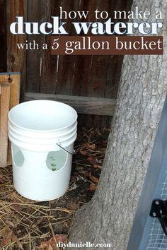 Use a 5 gallon bucket to make a DIY duck water bucket that will give them plenty of water with less mess! Raising Farm Animals, Raising Ducks, Duck Waterer, Backyard Ducks, Backyard Ideas, Duckling Care, Ducky Duck, Muscovy Duck, Duck Coop