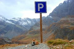 Fox Parking