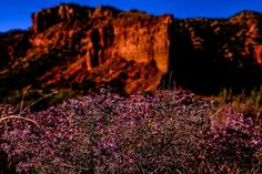 Caprock Canyon and some lovely little spring flowers! ~ Derrick Birdsall