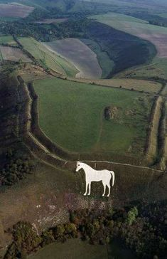 Bratton Camp and White Horse | English Heritage