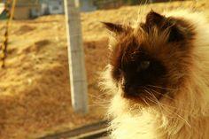 my cat #cute #cat #kitty