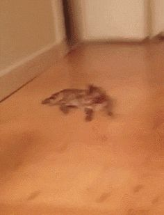 Do That Again, Come On, Do It Again (gif)