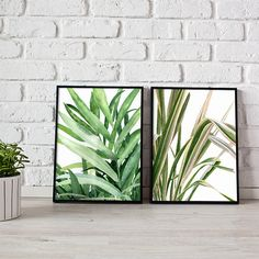 botanical print, set of 2 prints, wall art - 3 sizes available