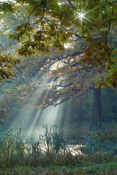 Light In The Forest :)