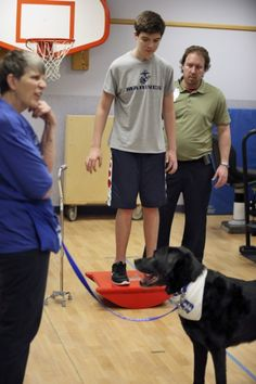 Boy learns to walk again with help of dogs with disabilities (Akron Beacon-Journal)