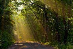 la conciencia siempre es el mejor camino, ya que se rige por la ley natural, este siempre esta en busca de la verdad y la razón.